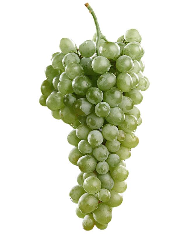chardonnay raisin blanc