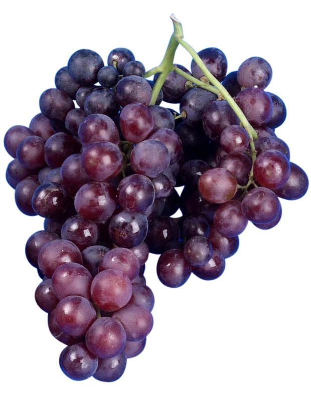 Moscatel de hamburo | Uvas de mesa | Vitivinicultura.net