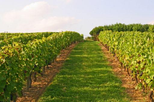 densités de plantation