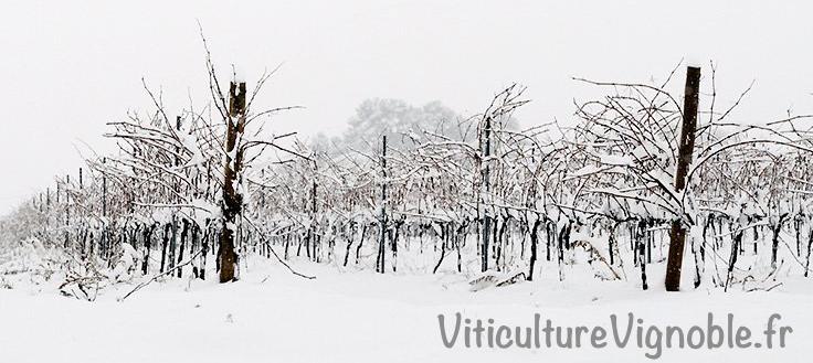 vigne_niege_3