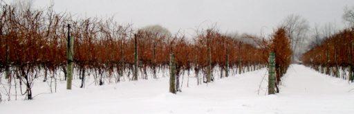 Vin de Glace. Qu'est et comment fabrique-t-on l'Ice Wine ?