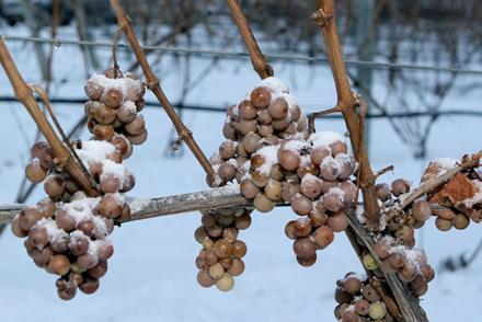 Raisins Gelés de Glace