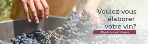 acheter des ceps, des trailles ou des plants de vigne