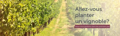 planter un vignoble