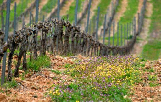 viticulture en france