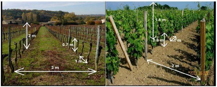 Combien de plants de vigne peut contenir mon terrain?