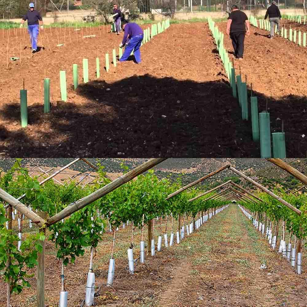 example densite plantation