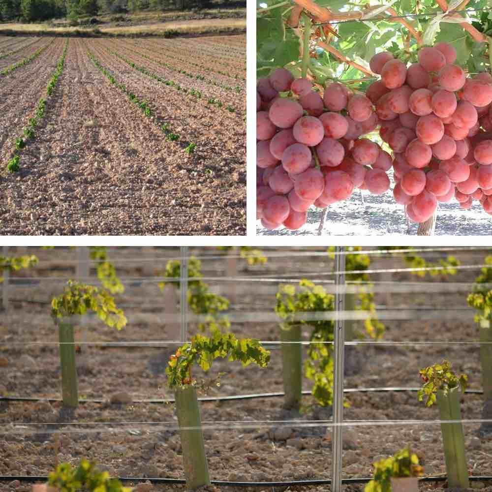 Quel Fruit Planter Au Printemps ▷ quand planter une vigne ? meilleure saison pour planter.