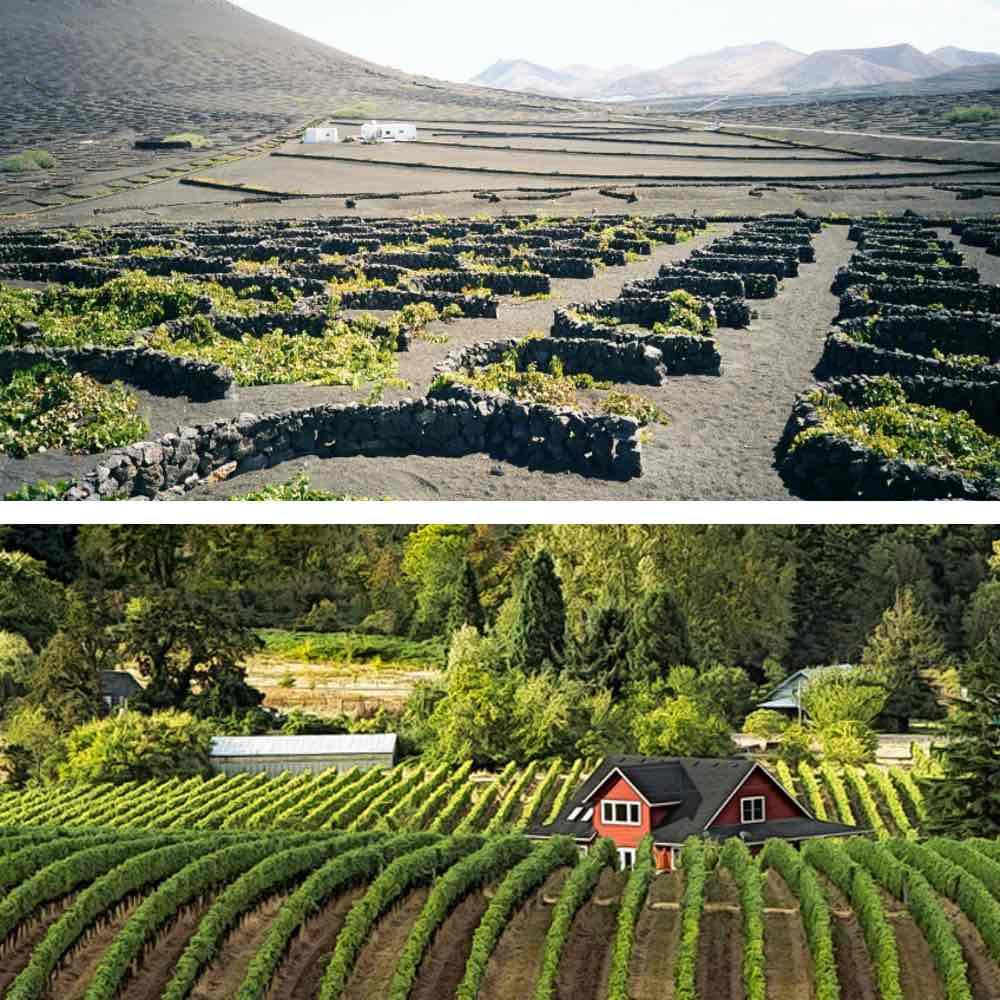 Où planter vigne