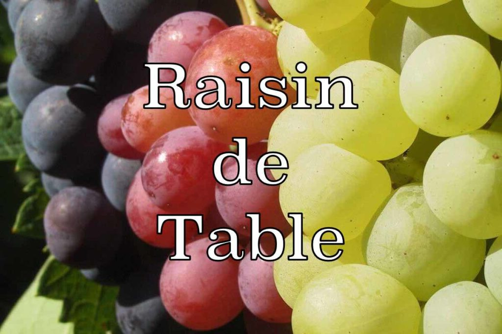 cepage raisin table