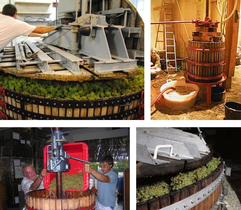presurage elaboration du vin rouge